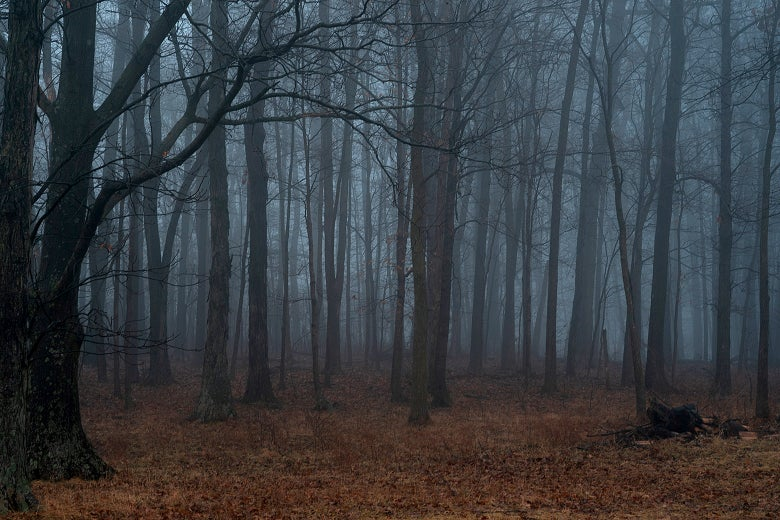 A misty, darkening forest of trees above a bed of red leaves.
