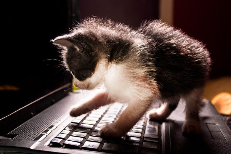 A kitten stands on the keyboard of a laptop.