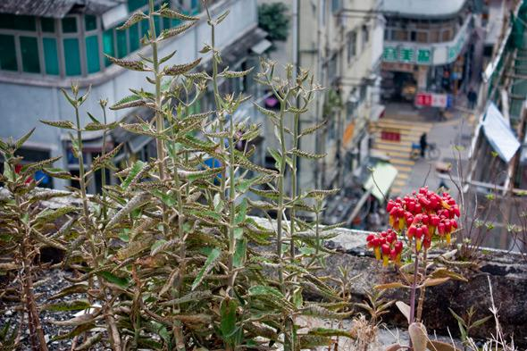 Wild plants growing through concrete in Yau Ma Tei. Nature doesn't need much encouragement in Hong Kong's warm, humid climate.