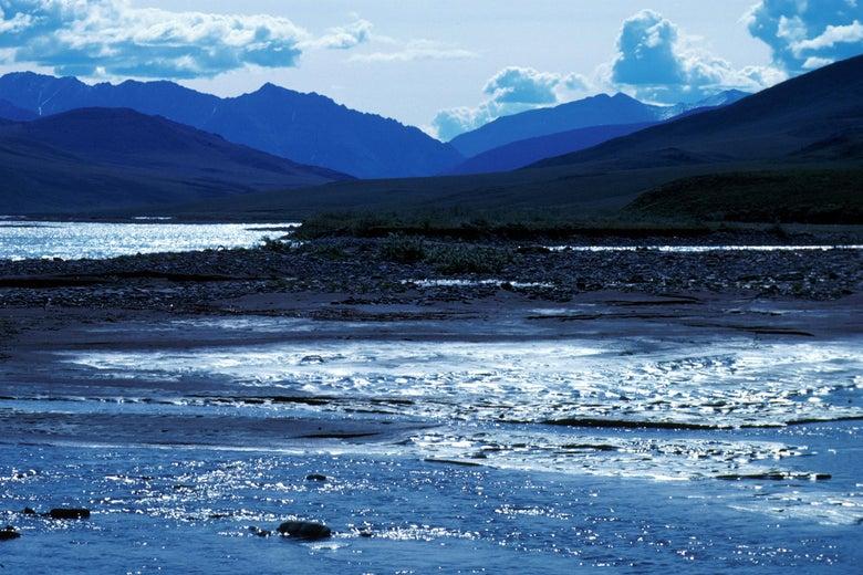The Arctic National Wildlife Refuge