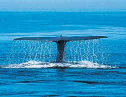 Whale. Click image to expand.