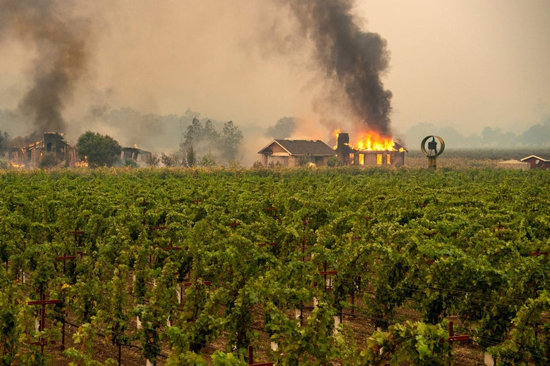 A building engulfed in flames at a vineyard.