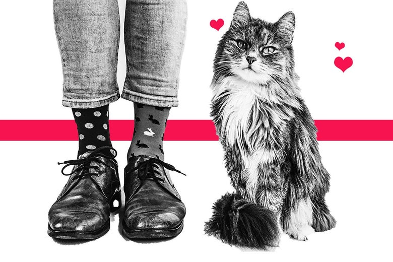 A pair of feet and a cat.