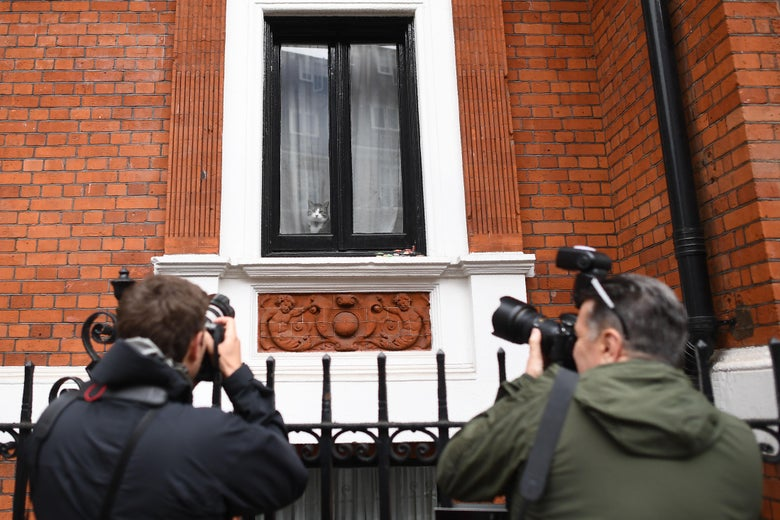 Photographers take pictures of a cat in the window of the flat at the Embassy of Ecuador in London on May 19, 2017.