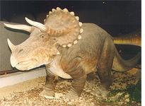 Triceratops statue at the Royal Belgian Institute of Natural Sciences         Click image to expand.