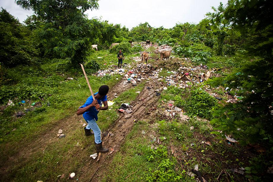 SAN PEDRO de MACORIS, DOMINICAN REPUBLIC. Two teenagers opt out of watching the cattle and instead practice their swings. The cows graze on the town trash while one young man swings a board at a flying bottle cap.