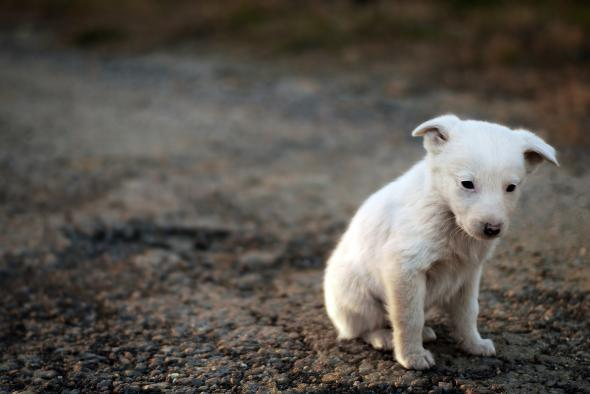 Sad Puppies At The Hugo Awards What Their Failure Tells Us About
