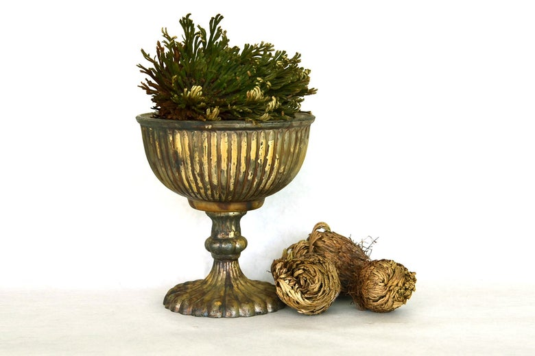 Flowers & Weeds Rose of Jericho