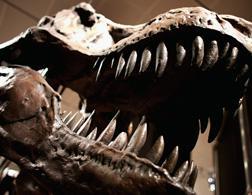 Dinosaur. Click image to expand.