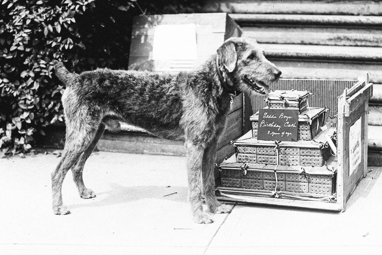 An Airedale terrier standing in front of a cake made of dog biscuits, with a sign noting he is 3 years old.