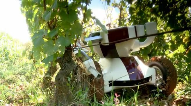 The Wall-Ye robot at work in a vineyard
