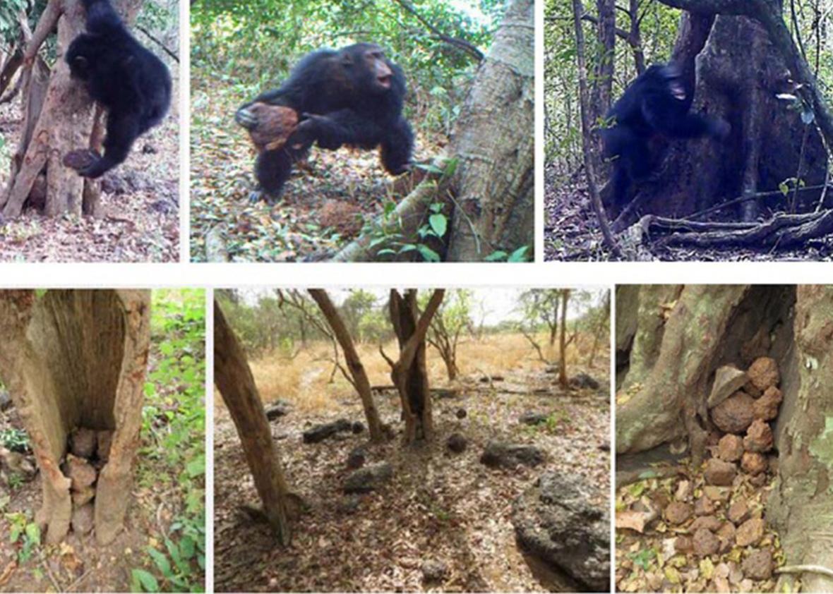 chimp 2.