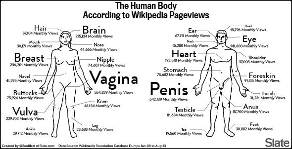 Vulva wiki Wikimedia