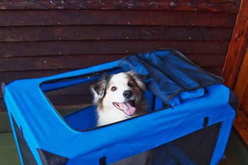 Dog in a Pet Gear Generation II Deluxe Portable Soft Crate.