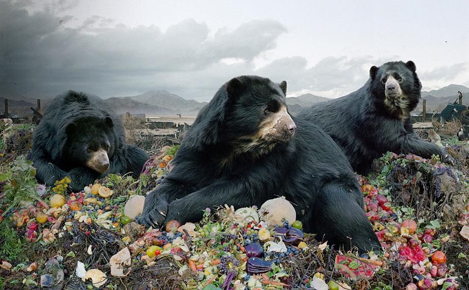 "Simen Johan: ""Until the Kingdom Comes"" documents shifting ecosystems (PHOTOS)."