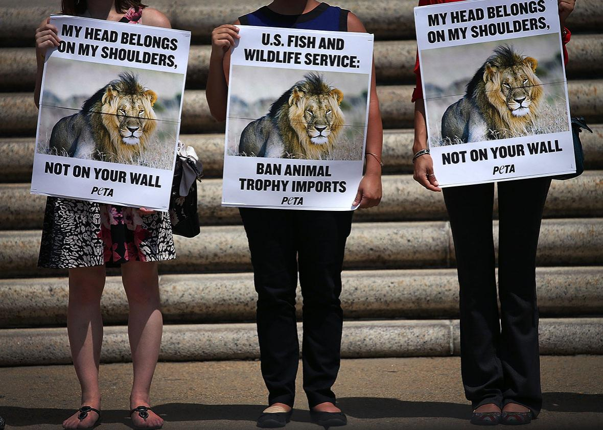 PETA) protesters hold pictures of Cecil the Lion.