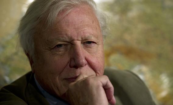 David Attenborough is not impressed.