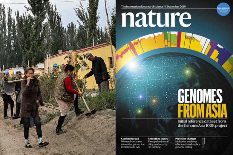 A side-by-side illustration of community of Uighurs working in a field and the cover of the magazine Nature