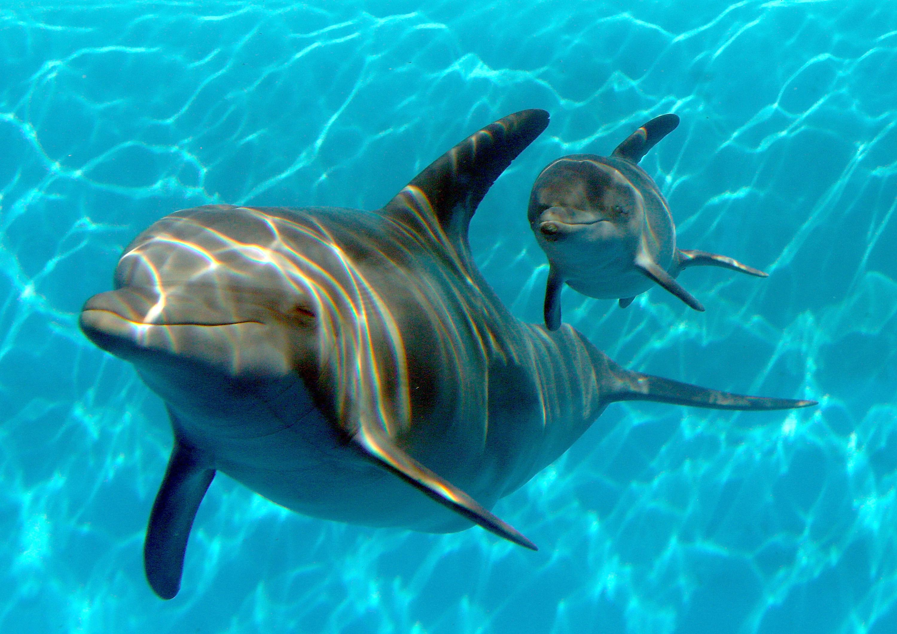 Two friendly-looking dolphins, a mother and calf, swimming toward the camera.