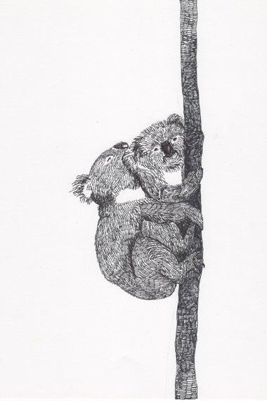 Koalas doin' it.