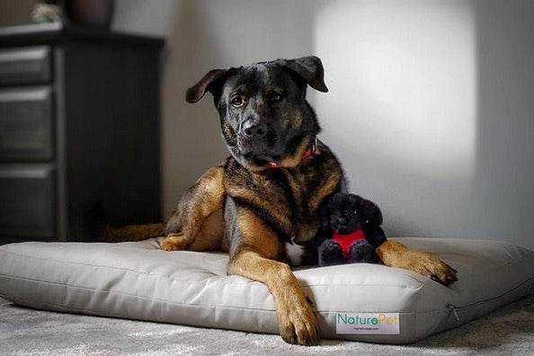 NaturoPet Natural Orthopedic Dog Bed