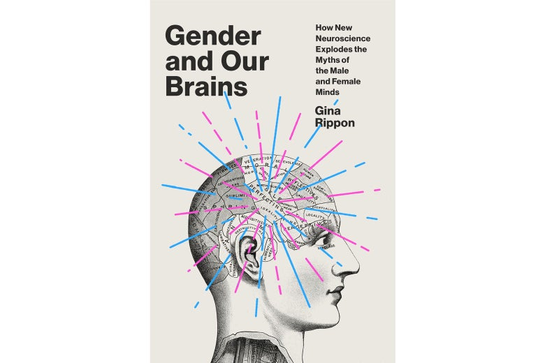 Gender and Our Brains book cover.
