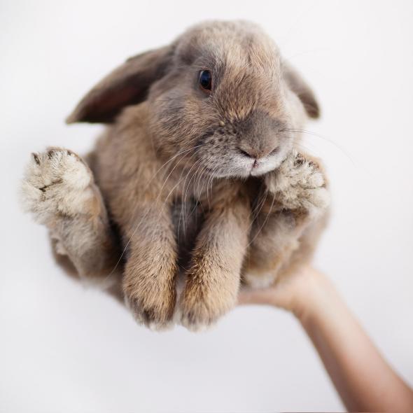 Bunny Emeritus