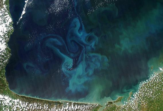 Phytoplankton bloom off the coast of France