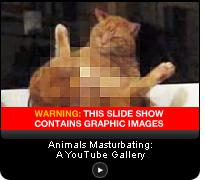 Click here for a slide show of animal-masturbation videos from YouTube. (Note: This slide show contains graphic images that may not be suitable for all viewers.)