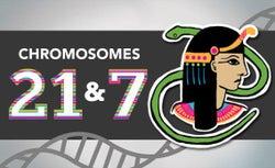 Chromosomes 21 & 7