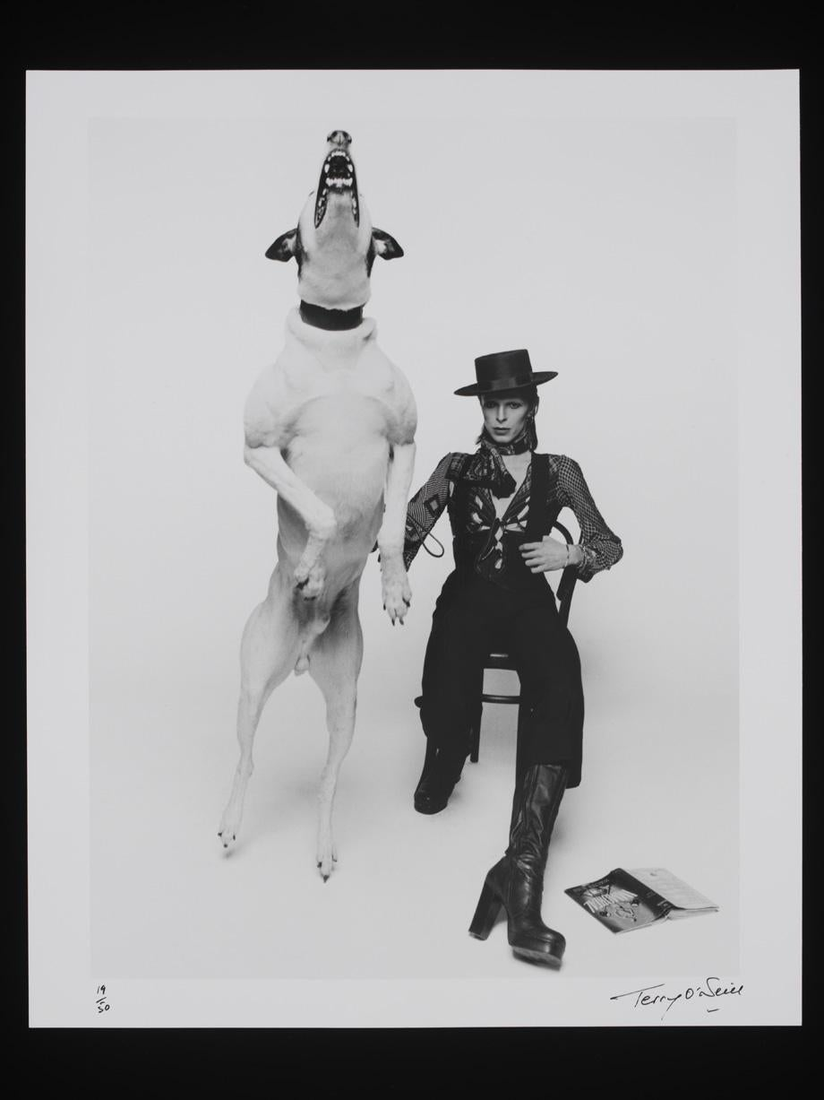 Photographs of David Bowie for Diamond Dogs, 1974.