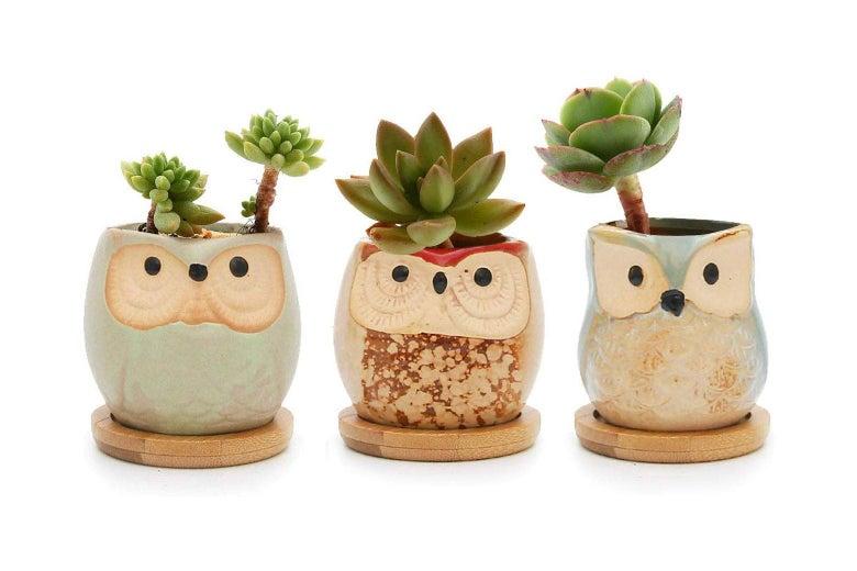 Owl planters.