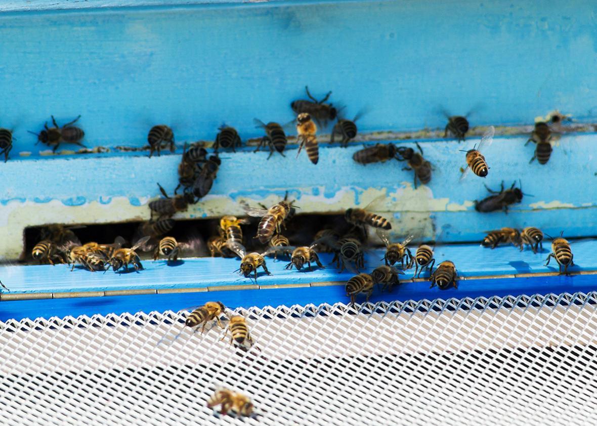 bee hive.