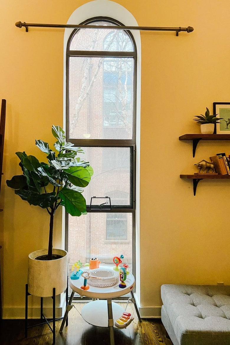 A window in a warm yellow room with a fig tree.