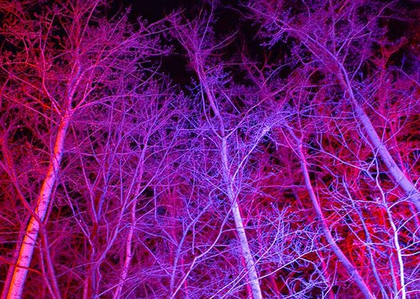 Wild colored trees outside a drive-in movie theater next to the 2 Kolegas bar where the drug crackdown occurred in Beijing on Aug. 9, 2014