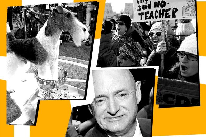 Wire fox terrier, teachers striking, and Mark Kelly.