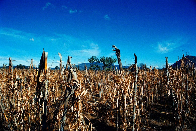 A view of a field of ruined crops
