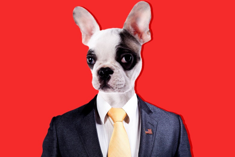 A dog looking presidential in a suit and tie