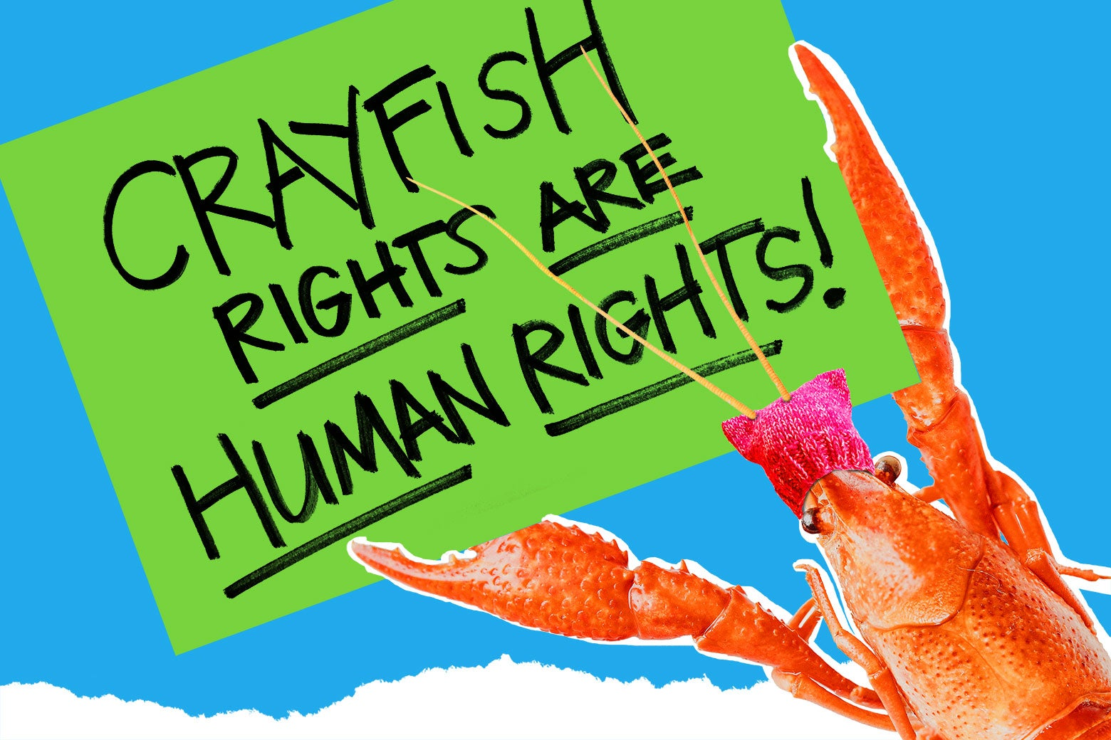 "A crayfish in a pussy hat holding up a sign that says ""Crayfish rights are human rights."""