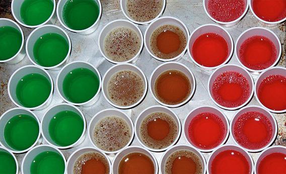 A tray of jello shots before refrigeration.