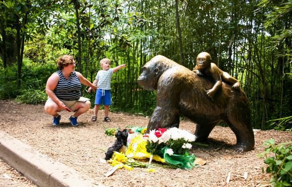former zookeeper on the death of gorilla at cincinnati zoo