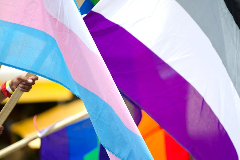 A person holding an asexual (black, gray, and purple) flag.