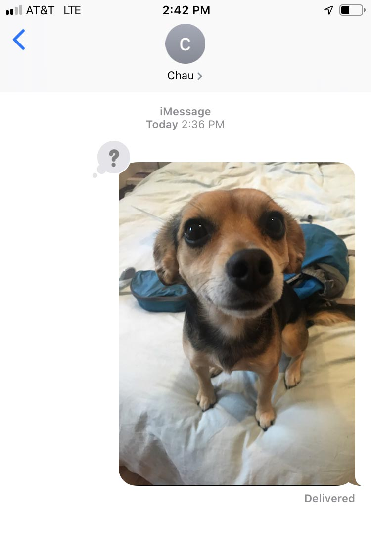 Text including a dog snapshot and a question mark emoji.