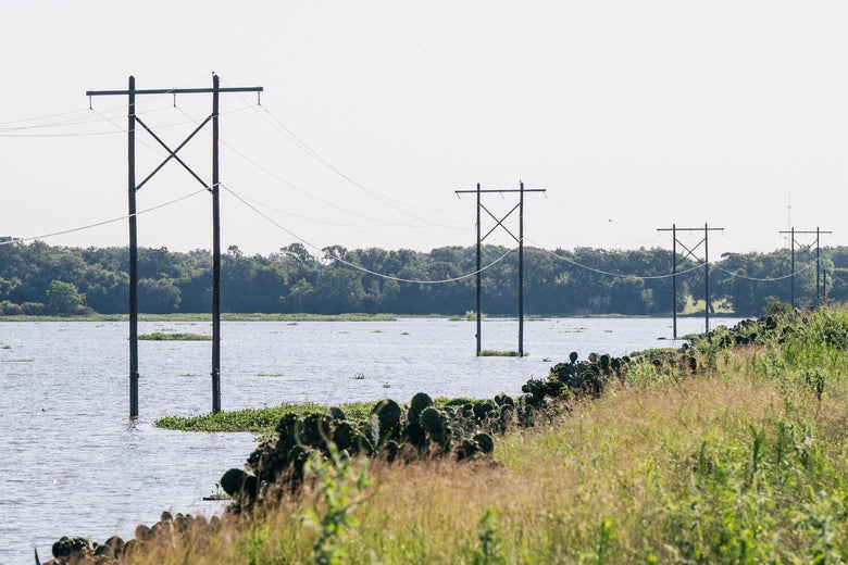Electrical power-lines stretch throughout the picture over a river. The bank of the river has lots of grass and cactus vegetation cover.