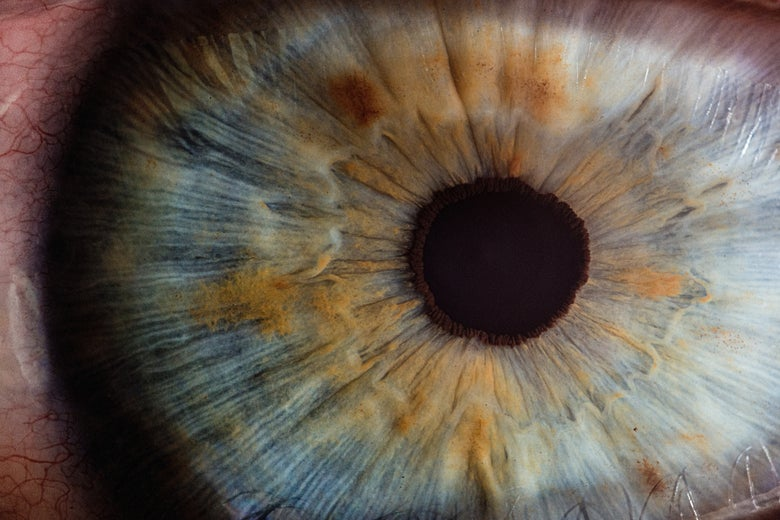 An extreme closeup of a human eye