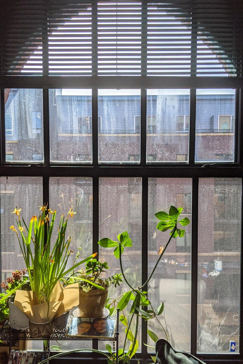 Plants in front of a sunny window.