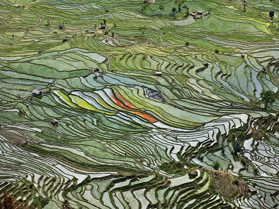 Rice Terraces #2, Western Yunnan Province, China 2012