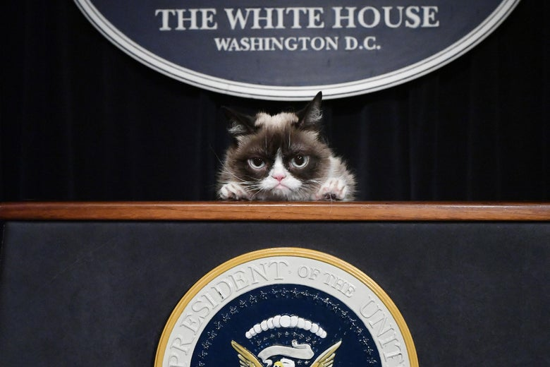 Bill de Blasio's Presidential Aspirations Are As Dead As Grumpy Cat (Too Soon?)