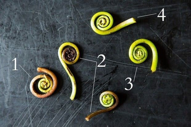 Five fiddlehead ferns labeled with numbers. 1. A limp stalk with a large gap in the spiral. 2. Two different discolored fiddleheads, one brown at the talk, the other black at the center of its spiral. 3. Bright green color throughout. 4. The end of the stalk is thick and celery-like.