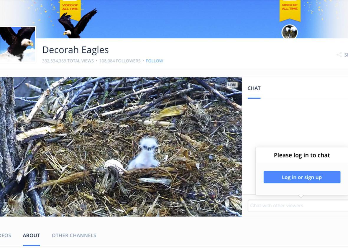 Decorah Eagles webcam.